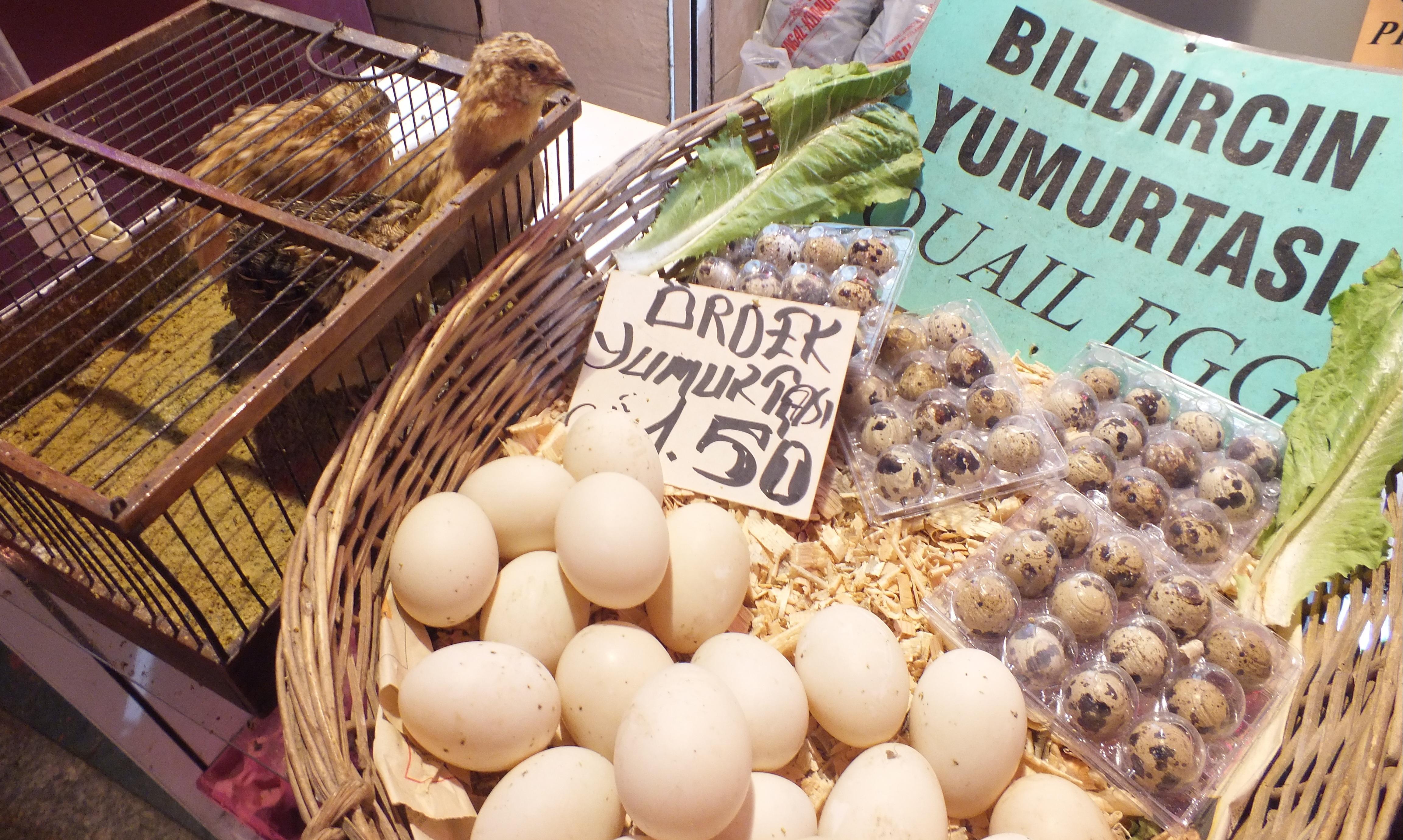Ördek Yumurtası Yenir mi, Ördek Yumurtasının Faydaları Ve Zararları